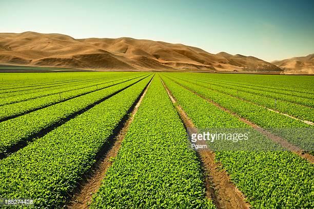 農作物成長の肥沃な土地に農場