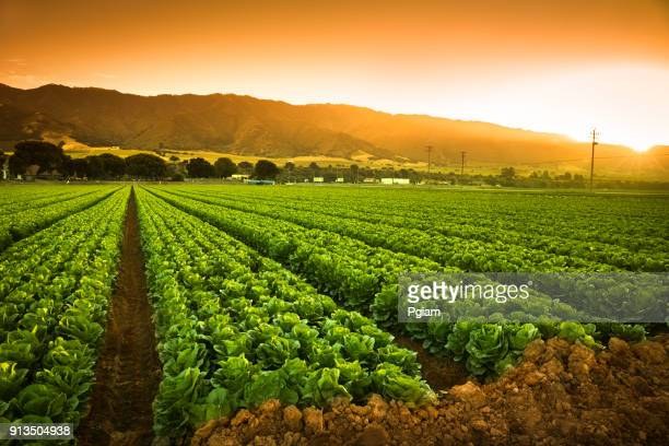 crops grow on fertile farm land - california stock pictures, royalty-free photos & images