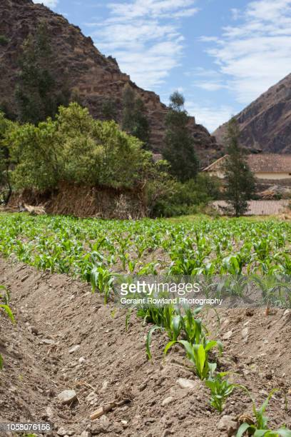 Crops growing in the Sacred Valley, Peru