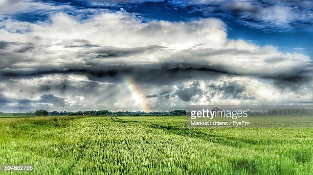 Crops Growing On Farm Against Cloudy Sky