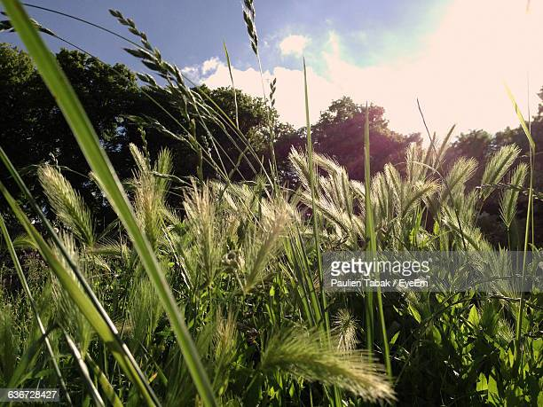 crops growing on field against sky - paulien tabak stock pictures, royalty-free photos & images