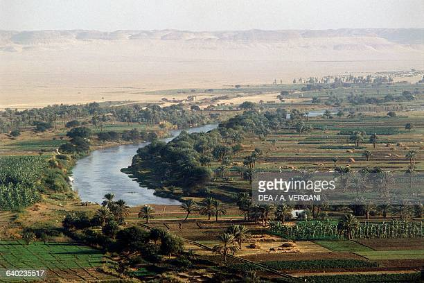 Crops in the Nile river valley aerial view Minieh region Egypt