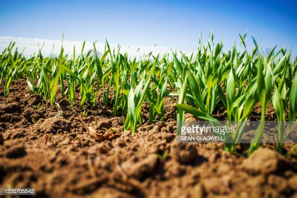 crops low angle - green colour stock pictures, royalty-free photos & images