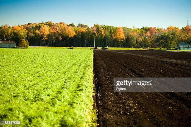 Crops on half a farm field