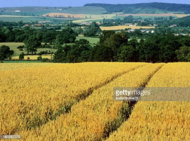 Los cultivos