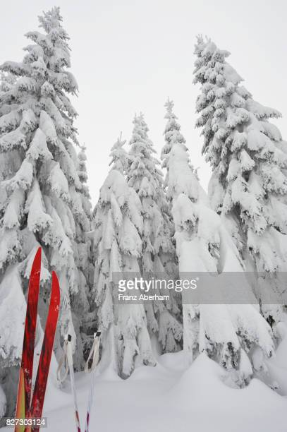 Cross country ski and snow covered bohemian forest, Austria