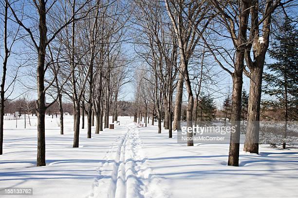 Cross country ski tracks in Montreal park