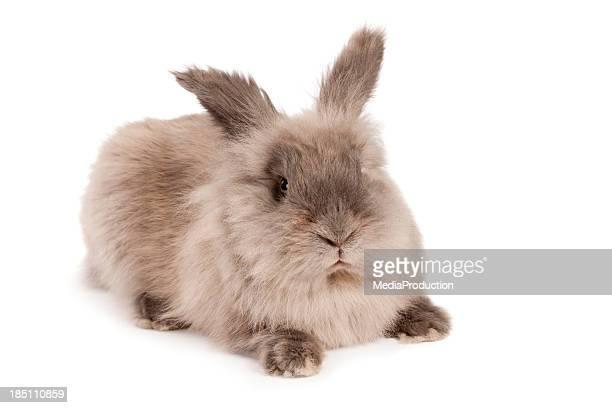 croce guardando morbido coniglio - coniglietto foto e immagini stock