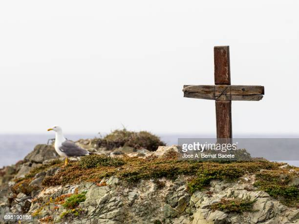 Cross of wood on the top of a mountain in an island deserted with gulls.