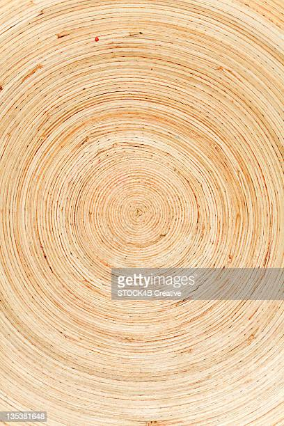 Cross section of a tree with annual rings
