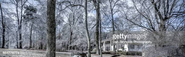 Cross section of forest in ice with house