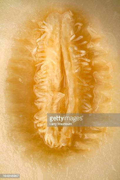 A cross section of honeydew melon that looks suggestive