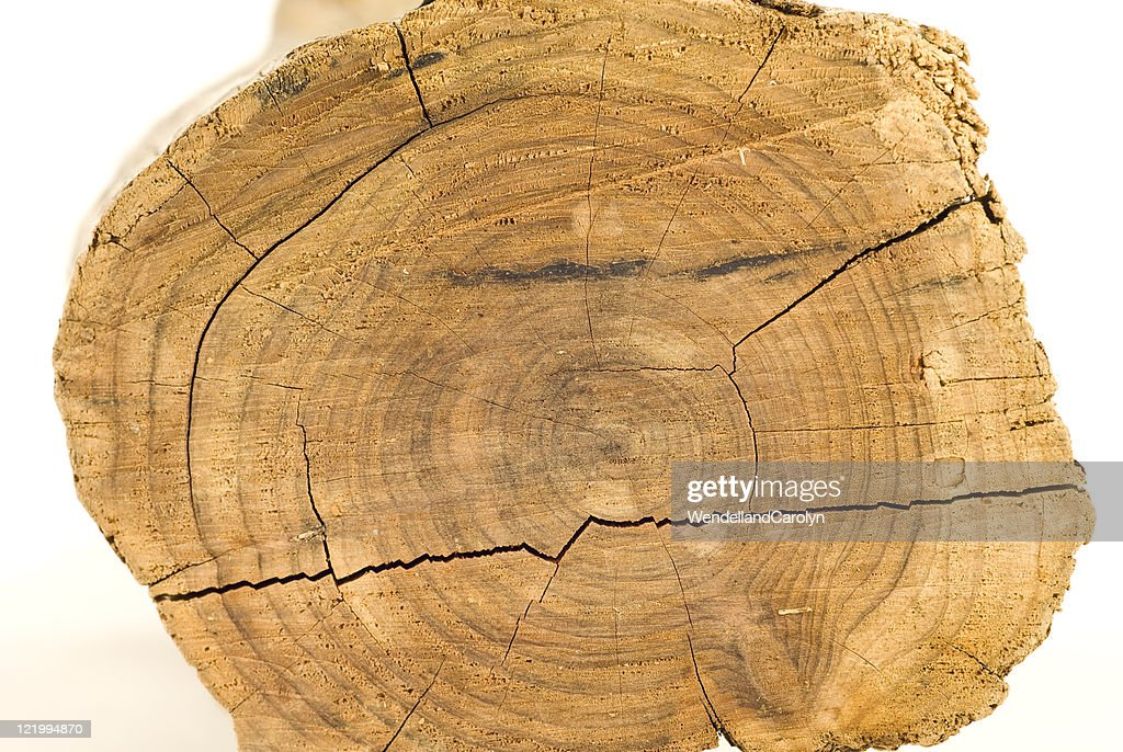 Cross Section Of Old Tree Trunk High Res Stock Photo Getty
