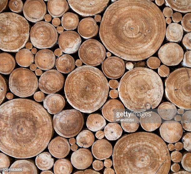 cross section of stump tree trunks background for interior decorate. wood tree background. - tree trunk stockfoto's en -beelden