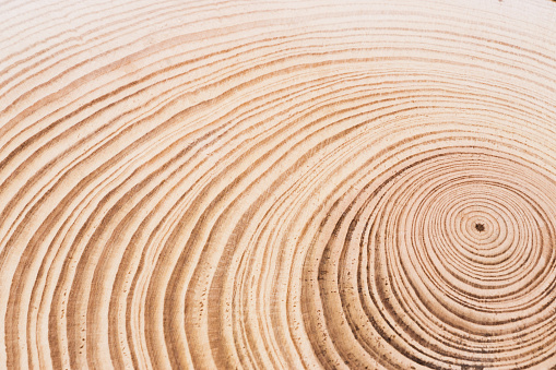 Cross Section of Tree, Annual Rings - gettyimageskorea