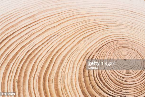 cross section of tree, annual rings - natural pattern stock pictures, royalty-free photos & images
