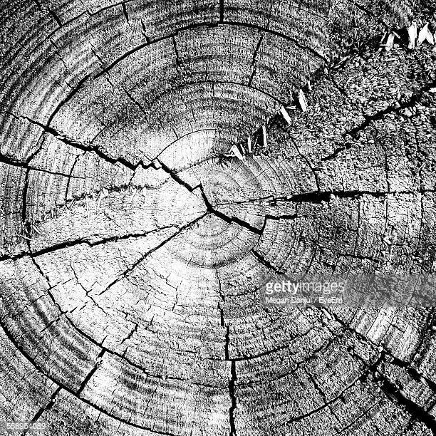 Cross Section Of Tree Showing Growth Rings