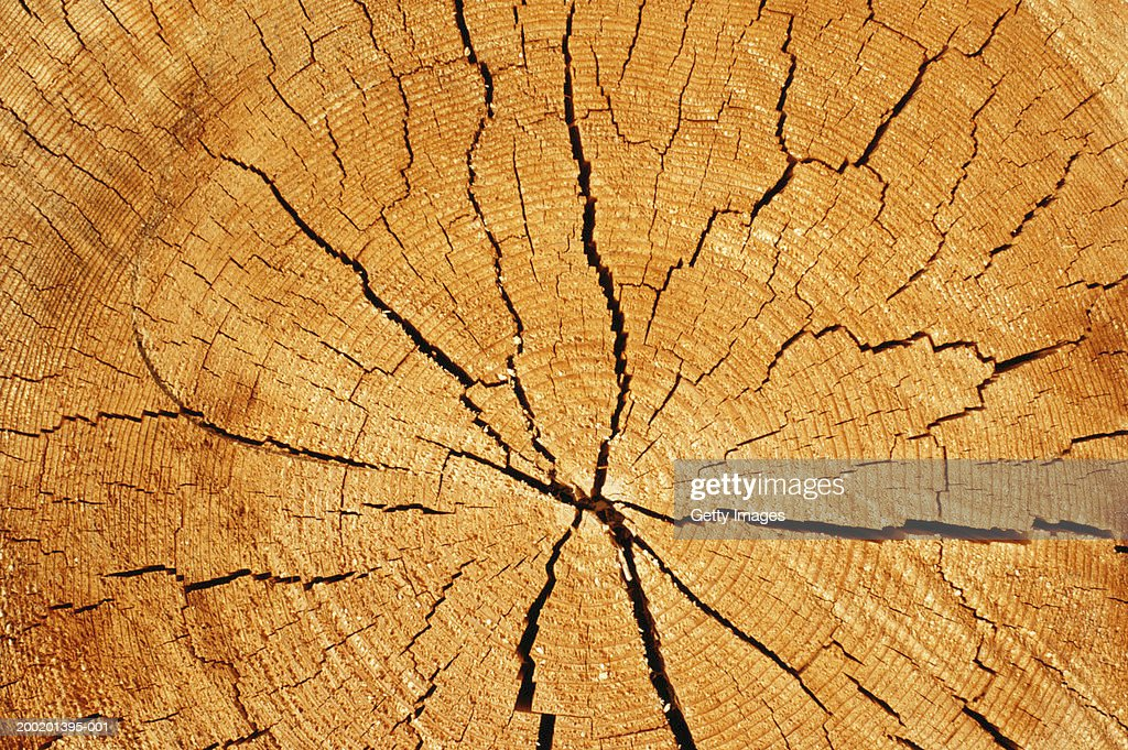 cross section of tree trunk with annual rings and cracks full frame