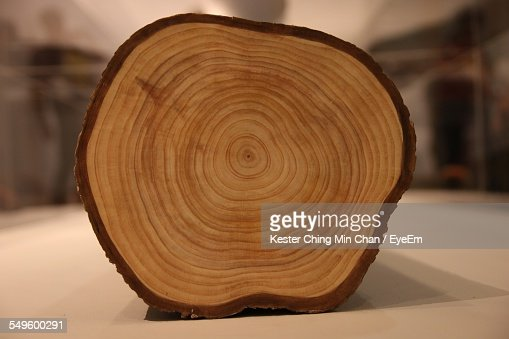 cross section of wooden log stock photo getty images. Black Bedroom Furniture Sets. Home Design Ideas