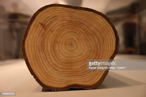 Cross Section Of Wooden Log