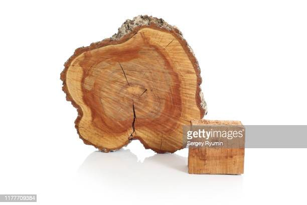 cross sections of tree trunk and wooden bar on a white background - part of a series foto e immagini stock