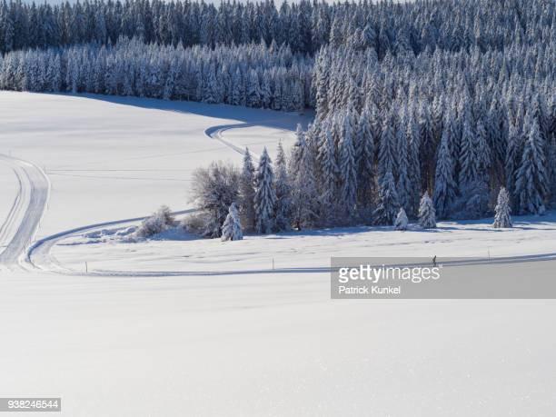 Cross-country skier on ski track Thurnerspur in the Black Forest near St. Märgen, Hochschwarzwald, Baden-Württemberg, Germany