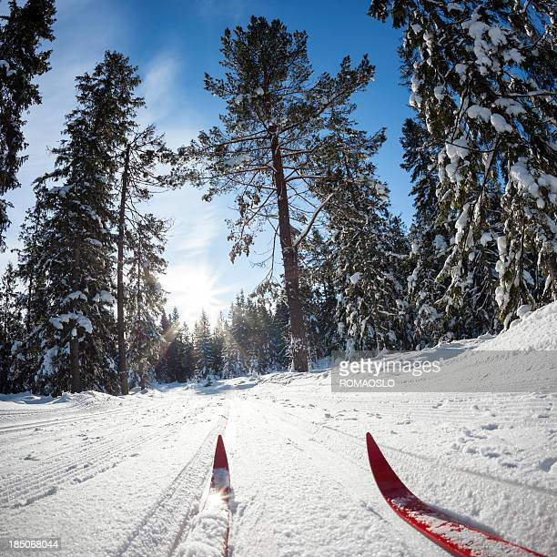 Cross-country skiing in Oslo, Norway