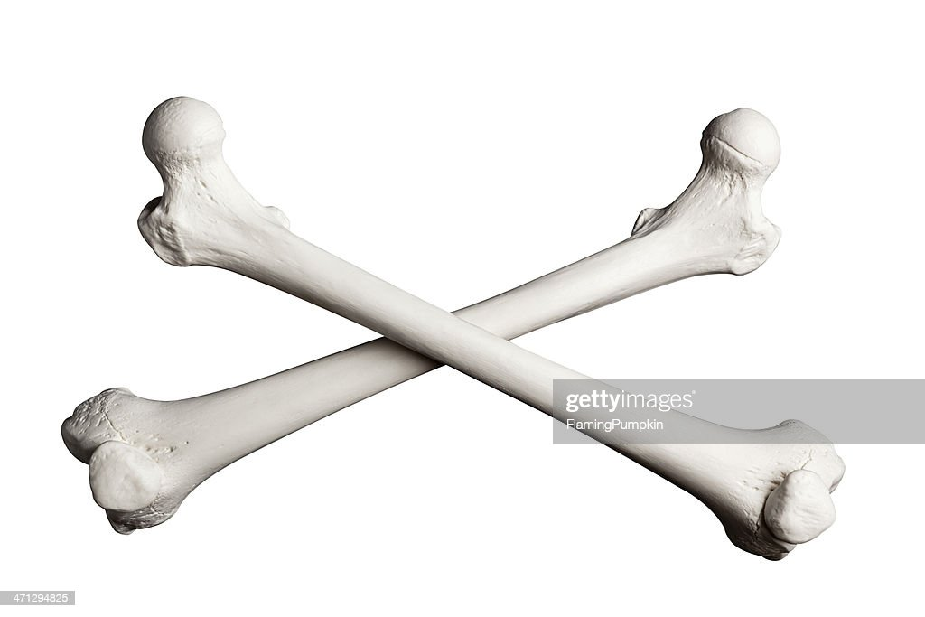 Human Bone Stock Photos and Pictures | Getty Images