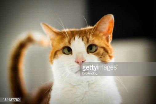 Cross-eyed orange cat