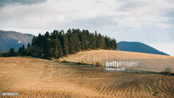 crossing fields - slovakia stock pictures, royalty-free photos & images