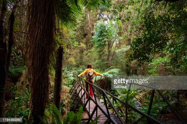 crossing the bridge! - new zealand stock pictures, royalty-free photos & images