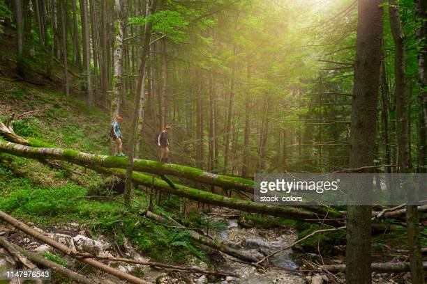 crossing the river - fallen tree stock pictures, royalty-free photos & images