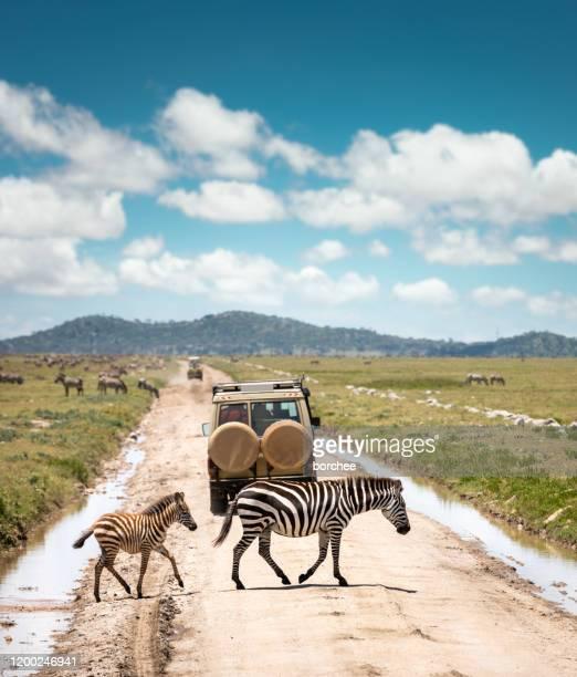 de weg oversteken - unesco werelderfgoed stockfoto's en -beelden