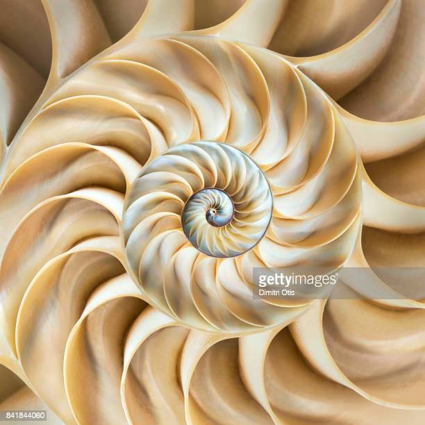 cross-section of chambered nautilus shell - effet graphique naturel photos et images de collection