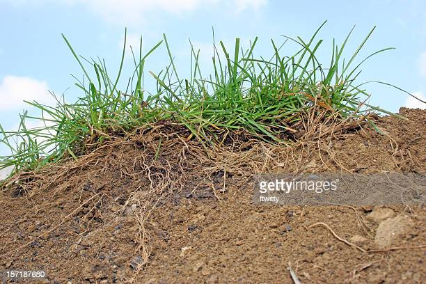cross-section of grass and soil - loam stock photos and pictures