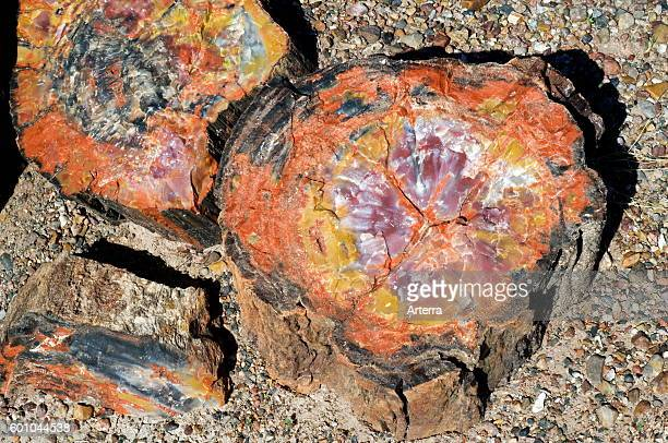 Crosssection of petrified wood showing colourful crystal patterns Painted Desert and Petrified Forest National Park Arizona USA