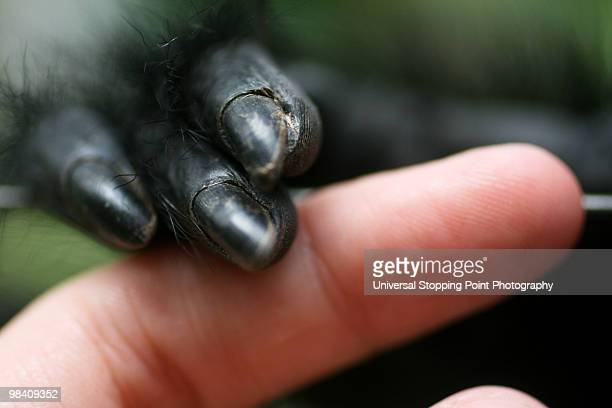 cross-species empathy - animal finger stock photos and pictures