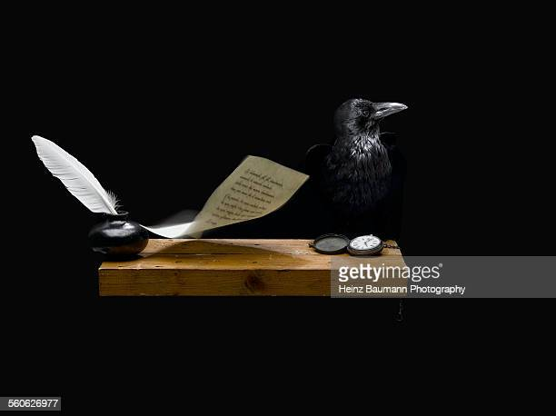 crow and a flying sheet of paper - heinz baumann photography stock-fotos und bilder