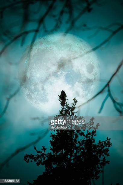 crow at the moon - night blue teal silhouette trees - crow bird stock photos and pictures