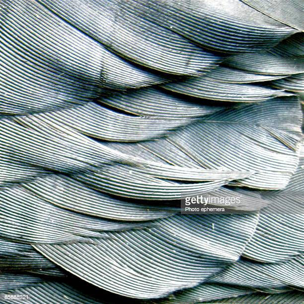 crow feathers - feather stock pictures, royalty-free photos & images