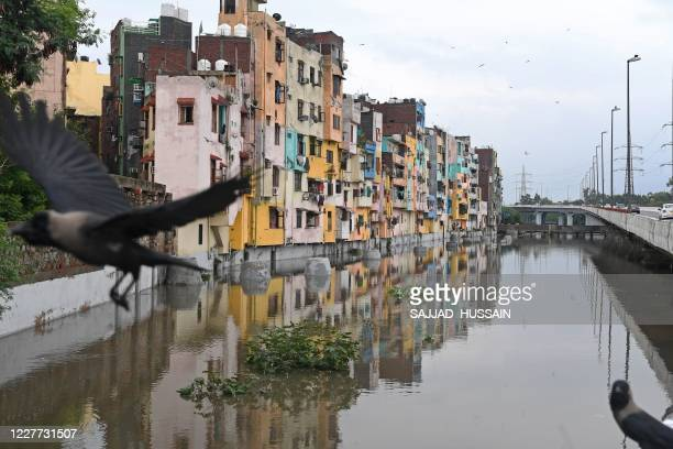 A crow flies over a flooded sewage canal next to a residential colony after a monsoon rainfall in New Delhi on July 22 2020