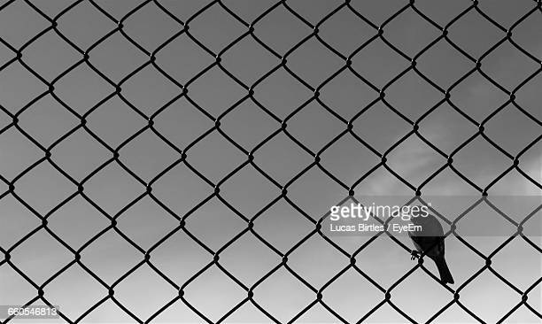 Crow Perching On Fence