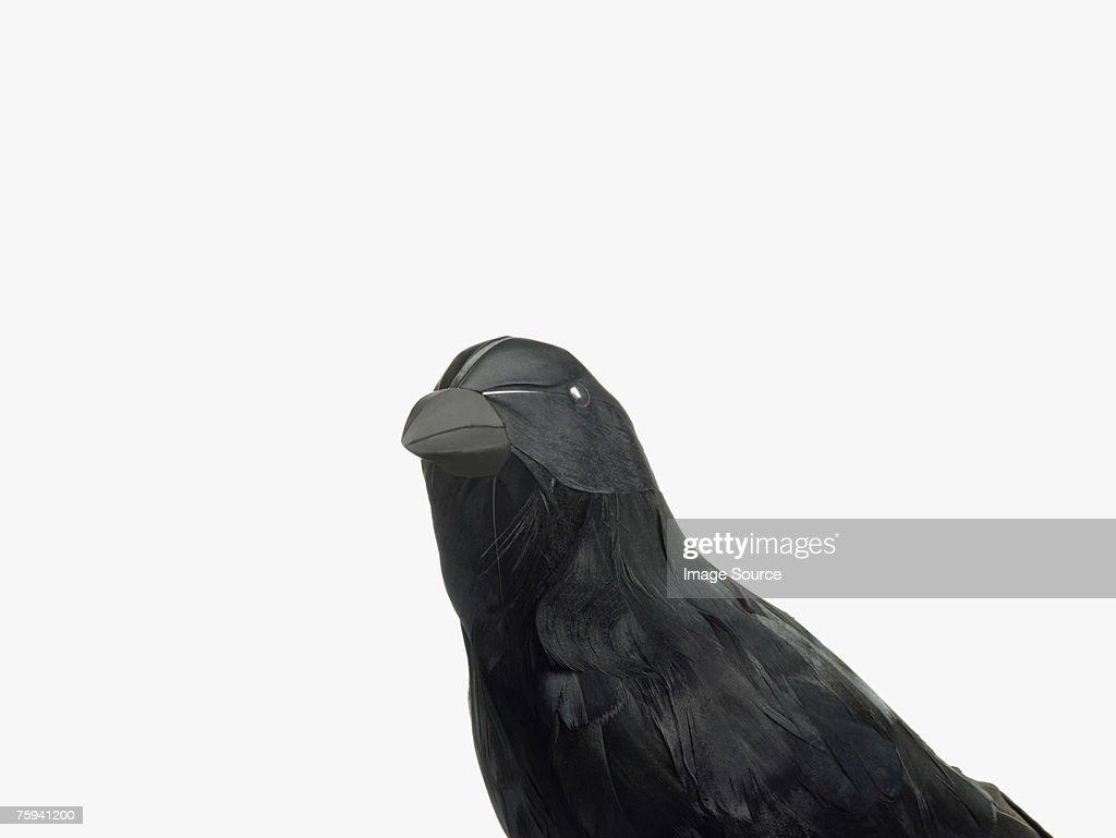A crow : Stock Photo