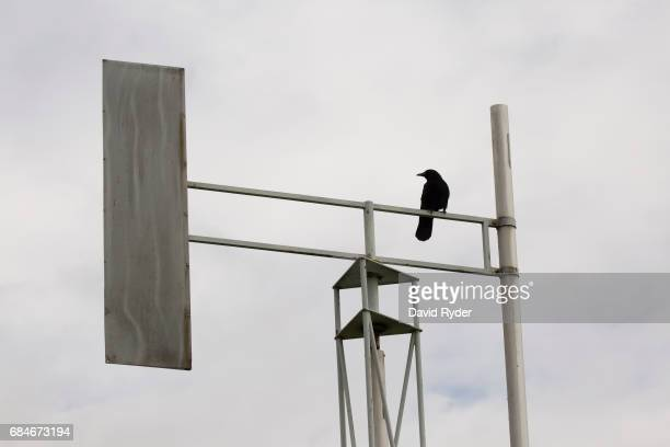 A crow sits perched atop one of many towers at A Sound Garden the sculpture that inspired the name of the band Soundgarden on May 18 2017 in Seattle...