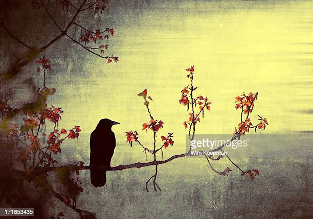 Crow sitting on a branch in a flower blossom tree