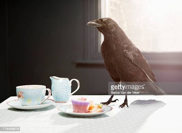 crow standing on table with cupcake. - fantasy stock pictures, royalty-free photos & images