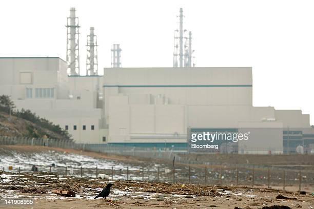 A crow stands near Tokyo Electric Power Co's Kashiwazaki Kariwa nuclear power station in Kashiwazaki City Niigata Prefecture Japan on Monday March 26...
