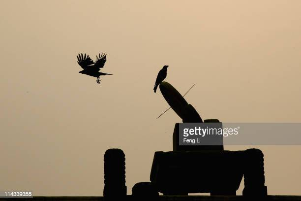 A crow stands on the sundial as another crow flying inside the Forbidden City which was the Chinese imperial palace from the midMing Dynasty to the...