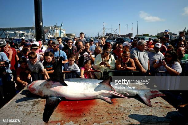 A crowd checks out the tail of a 360 pound common thresher shark during the North Atlantic Monster Shark Tournament at State Pier 3 on July 15 2017...