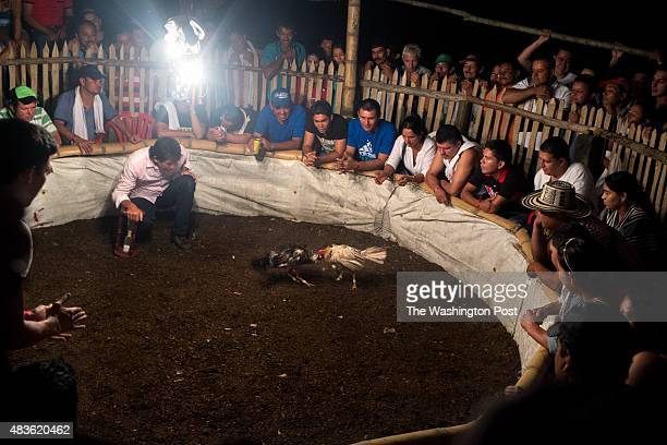 A crowd gathers around a cockfighting pit in the municipality of Muzo department of Boyacá Colombia on July 25 2015 Most of the residents from the...